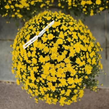 Cvetličarstvo