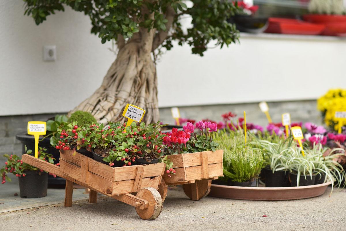 Vrtnartvo Matko vrtnarija