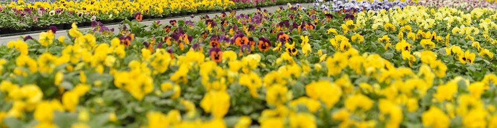 vrtnartstvo-matko-storitev-cvetlicarstvo
