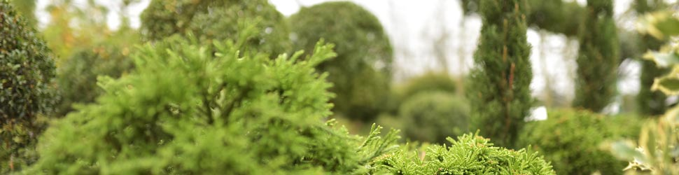 vrtnartstvo-matko-storitev-drevesnica