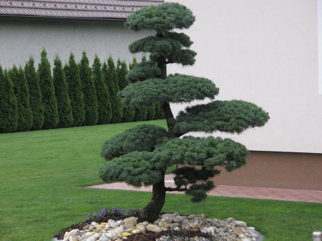 Vrtnarstvo matko drevesnica