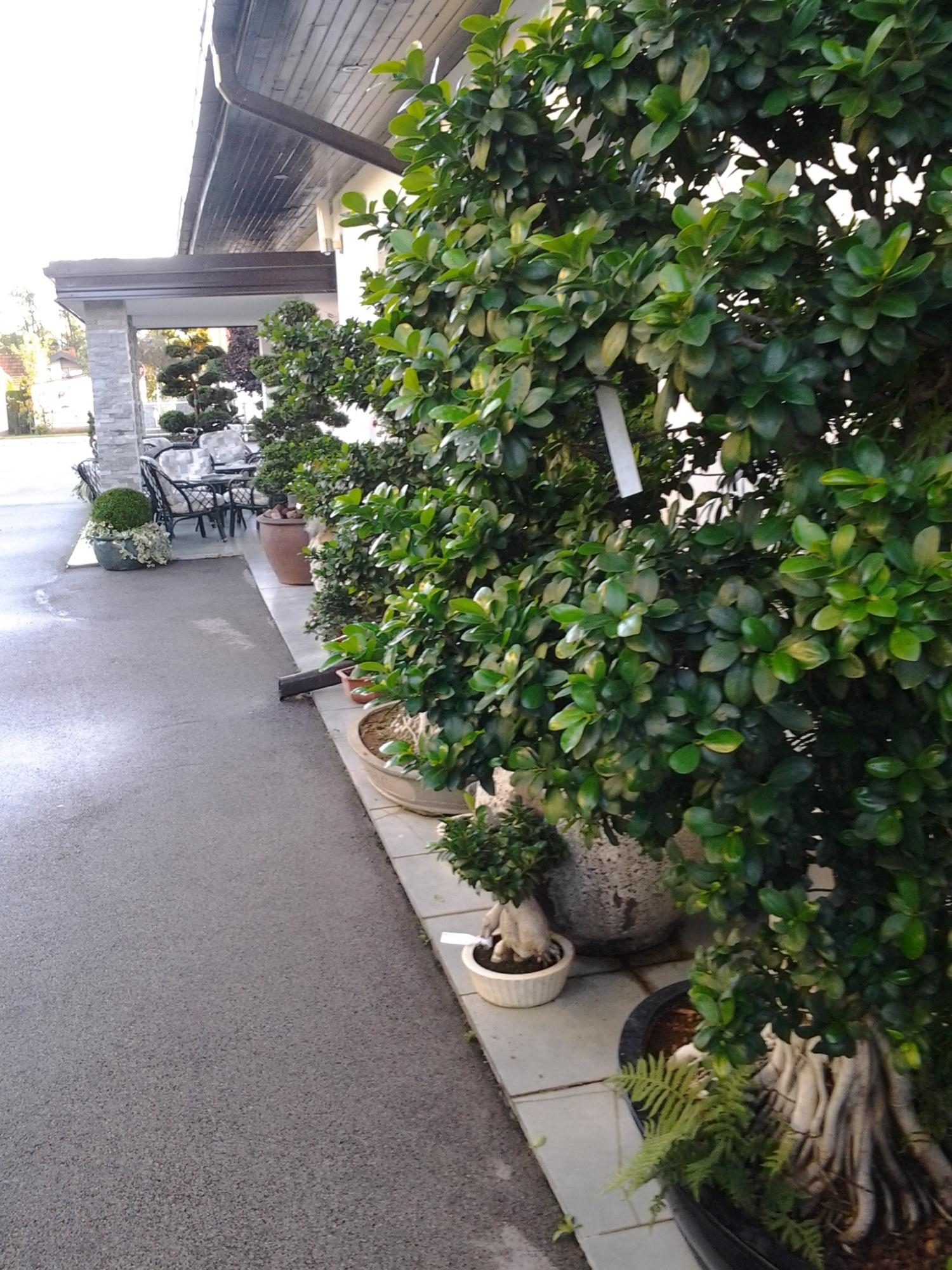 Urejanje vrtov Vrtnarstvo Matko